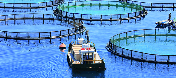 Fish Farms Offshore